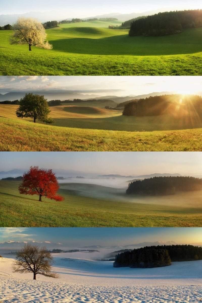 Fotografía de representación del clima a través de las cuatro estaciones.