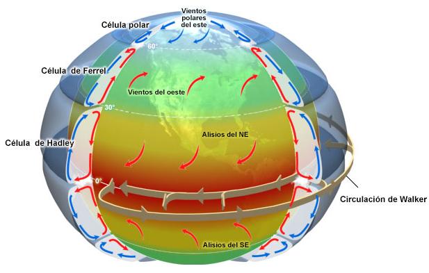 Patrones de vientos alisios y celdas de circulación globales.